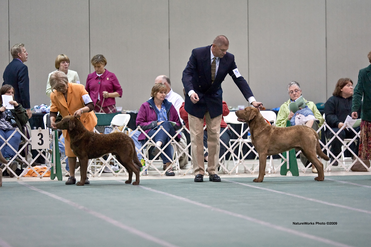 Thunder At The ACC National Specialty Show In 2009