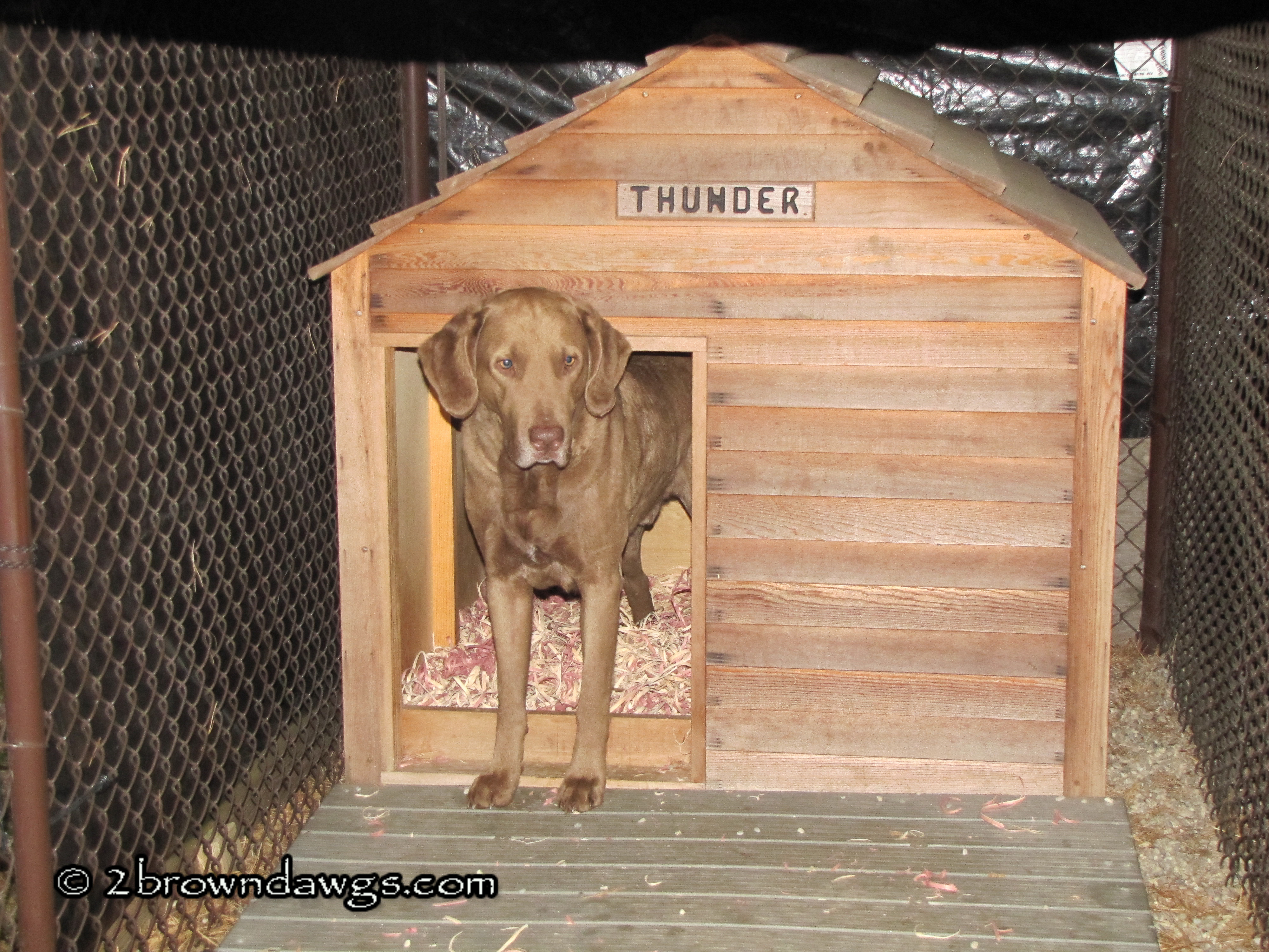 Getting ready for winter 2 brown dawgs blog for Cedar shavings for dog kennels