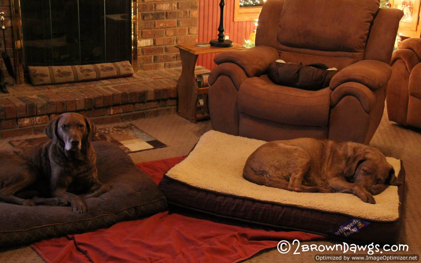 Three Snoozing Animals...Two Brown Dawgs And A Cat