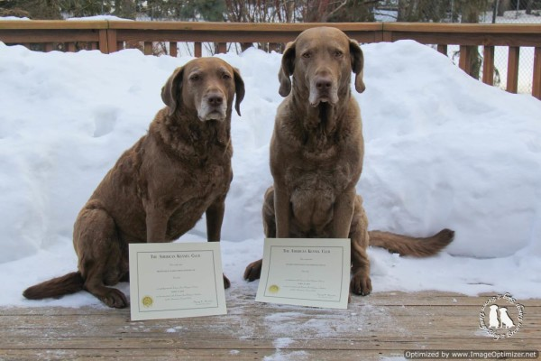 Thunder And Storm Canine Good Citizens