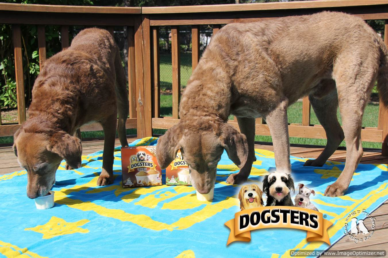 Dogsters ice cream coupons : Cablevision deals for existing ...