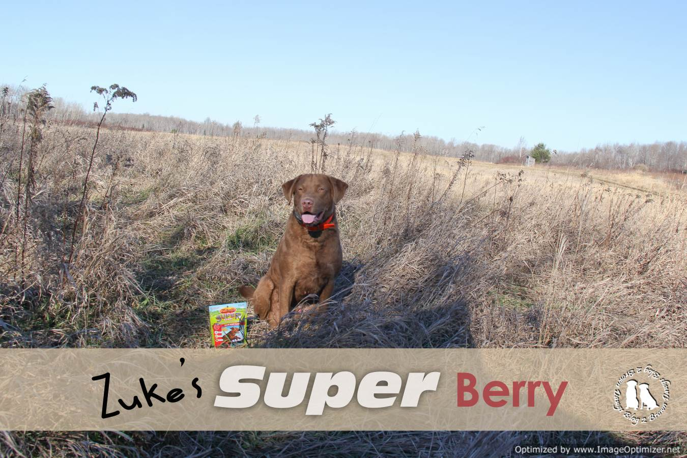Zuke's Super Berry Dog Treats