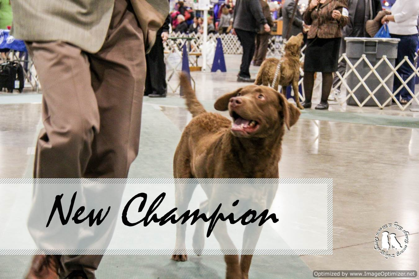 New AKC Champion Freighter