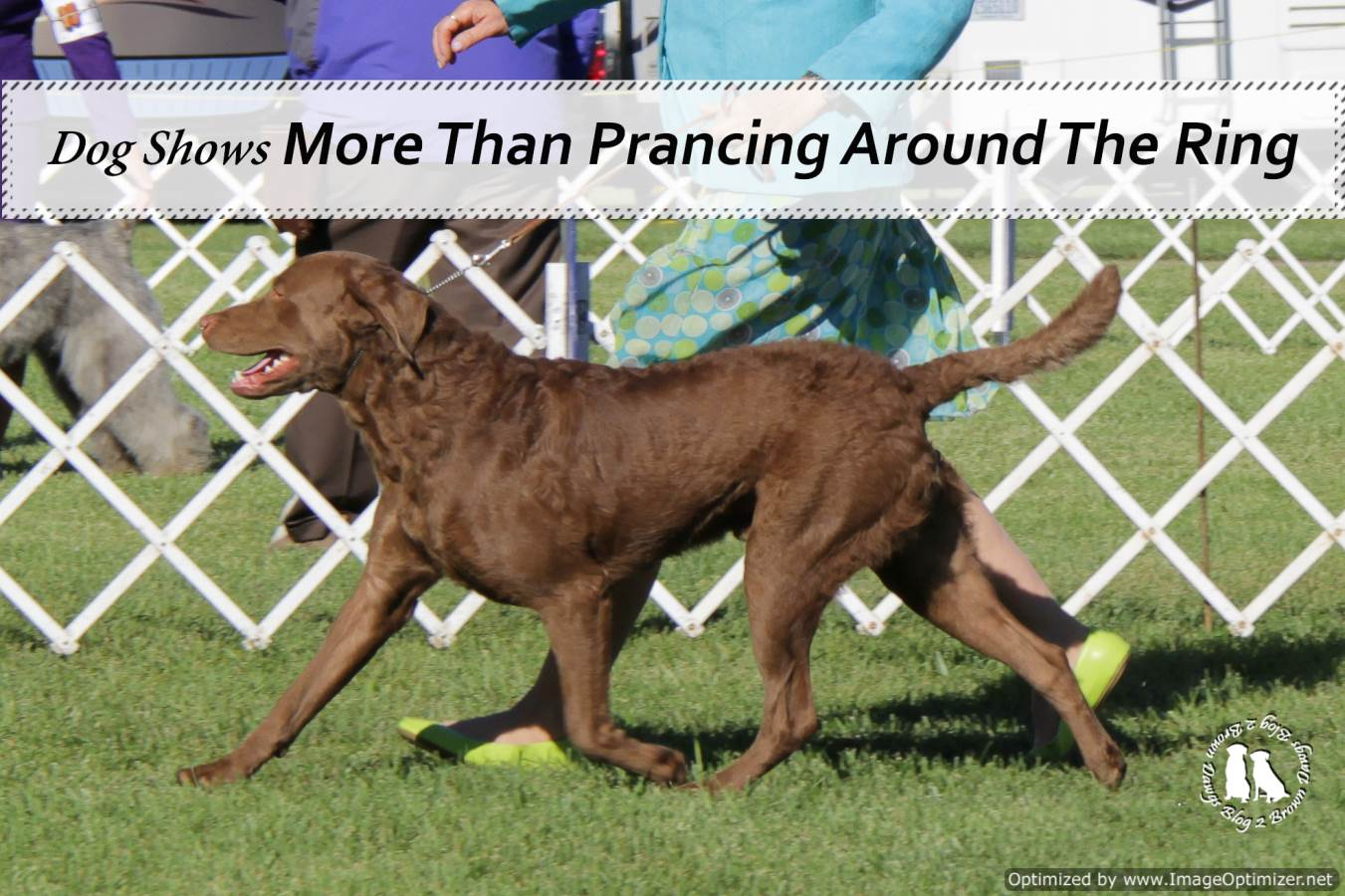 Dog Shows More Than Just Prancing Around