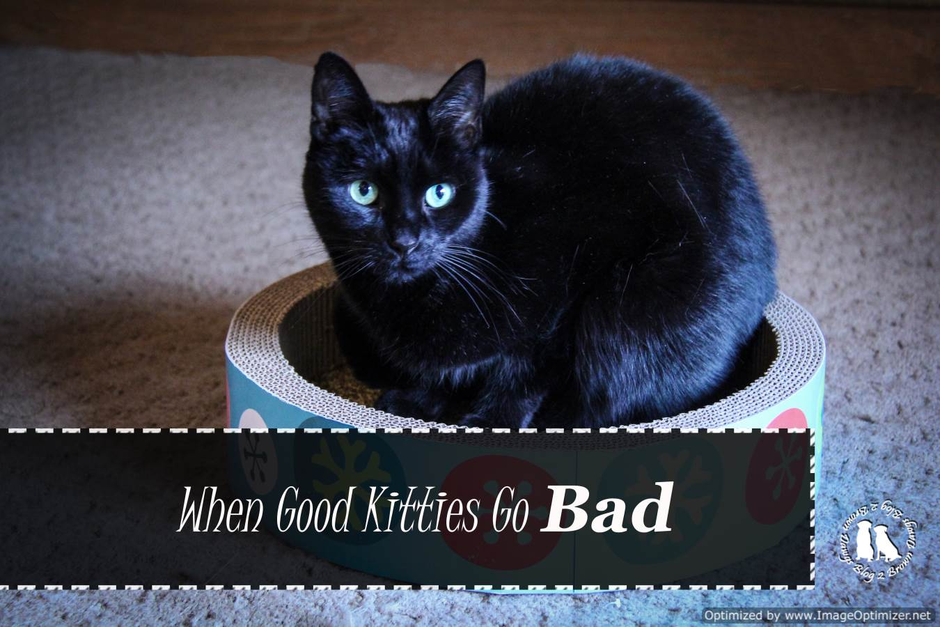 Good Kitties Go Bad