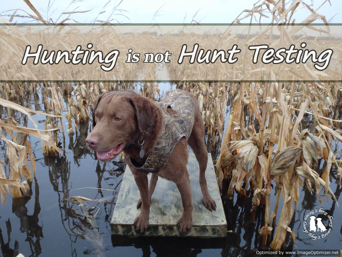 Hunting Is Not Hunt Testing