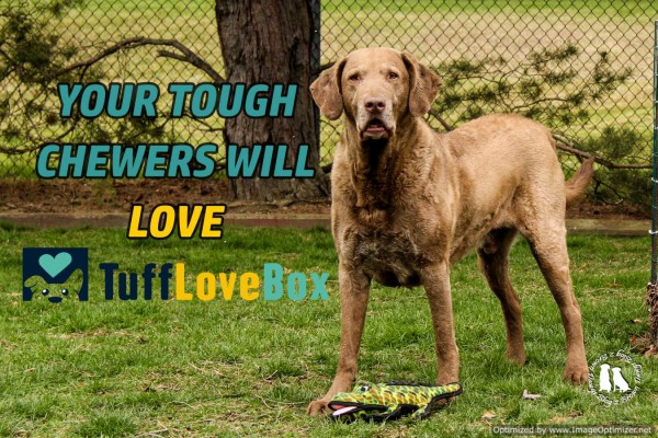 Your Tough Chewers Will Love TuffLoveBox