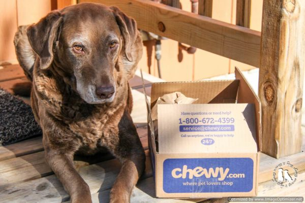 Storm Loves Chewy.com