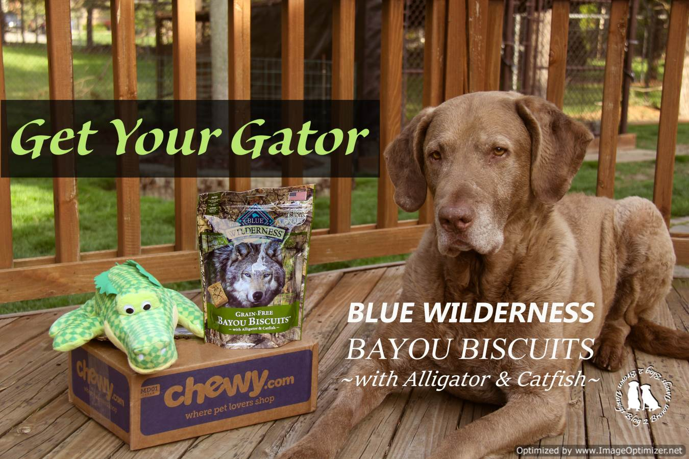 Get Your Gator