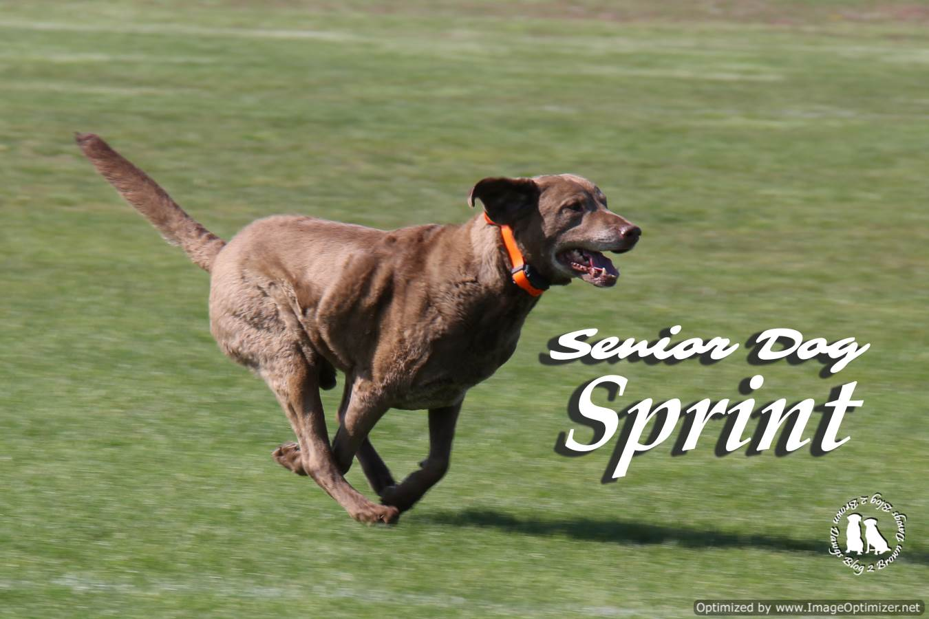 Senior Dog Sprint