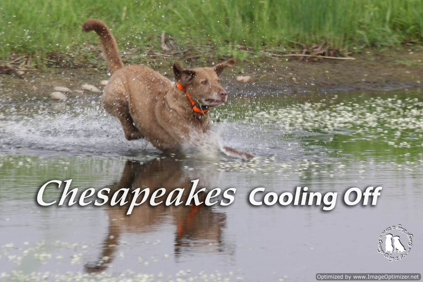 Chesapeakes Cooling Off
