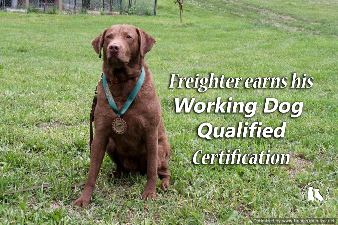 Freighter Working Dog Qualified
