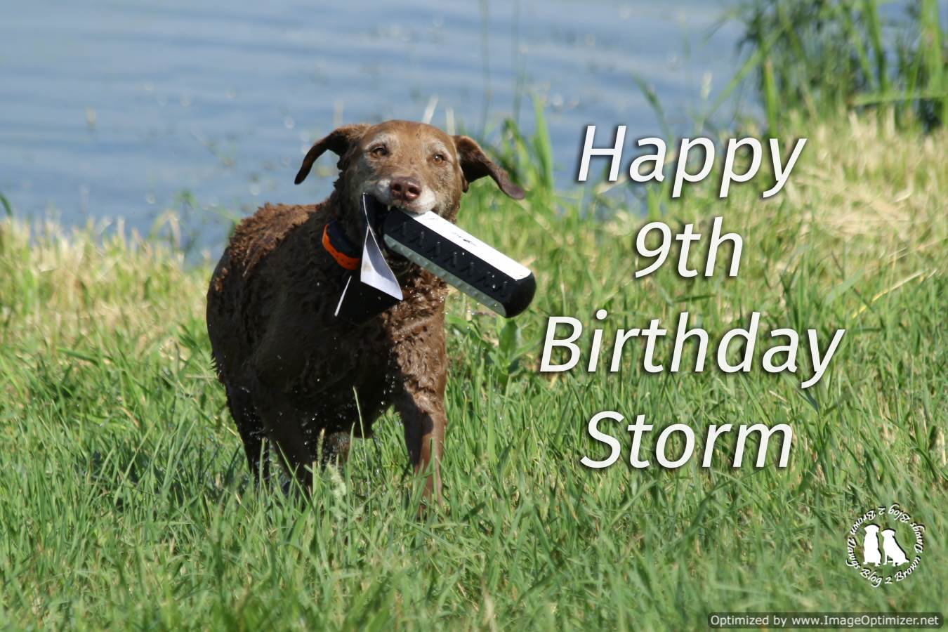 Happy Birthday Storm