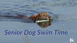 Senior Dog Swim Time