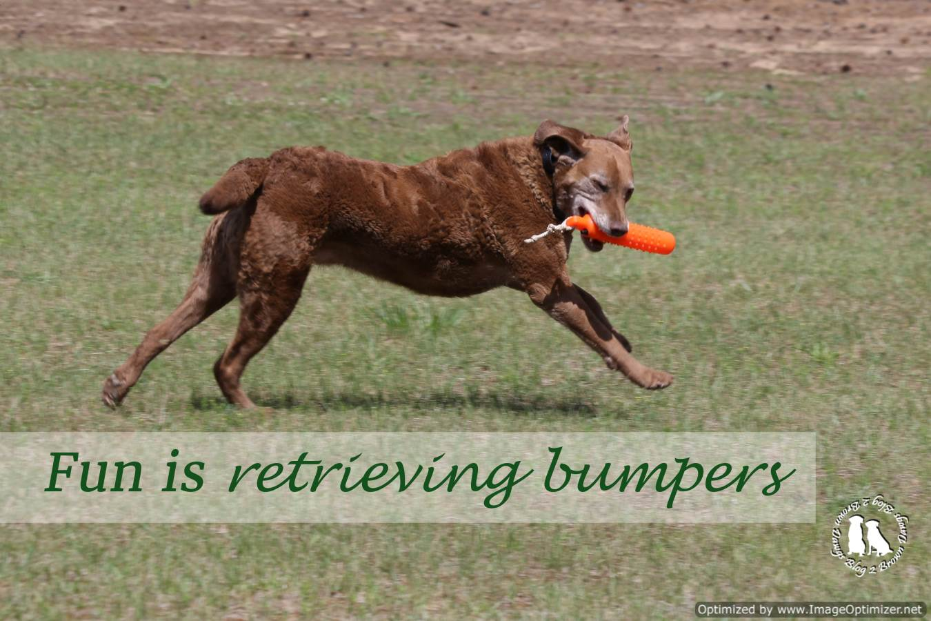 Retrieving Bumpers