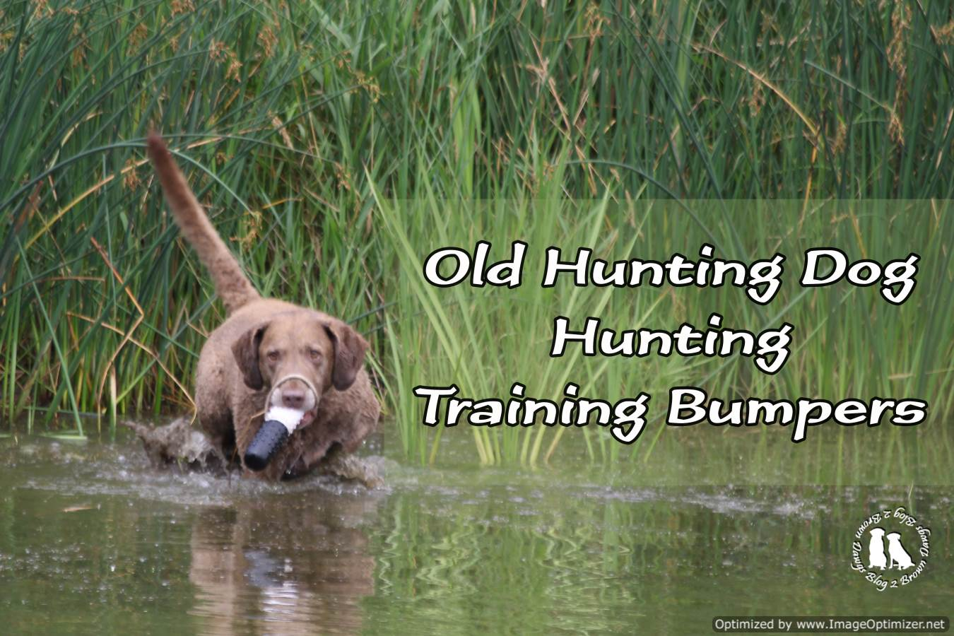 Old Hunting Dog Hunting Training Bumpers