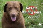 No Lost Hunting Dogs