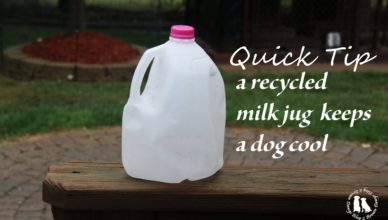 Recycled Milk Jug Keeps A Dog Cool