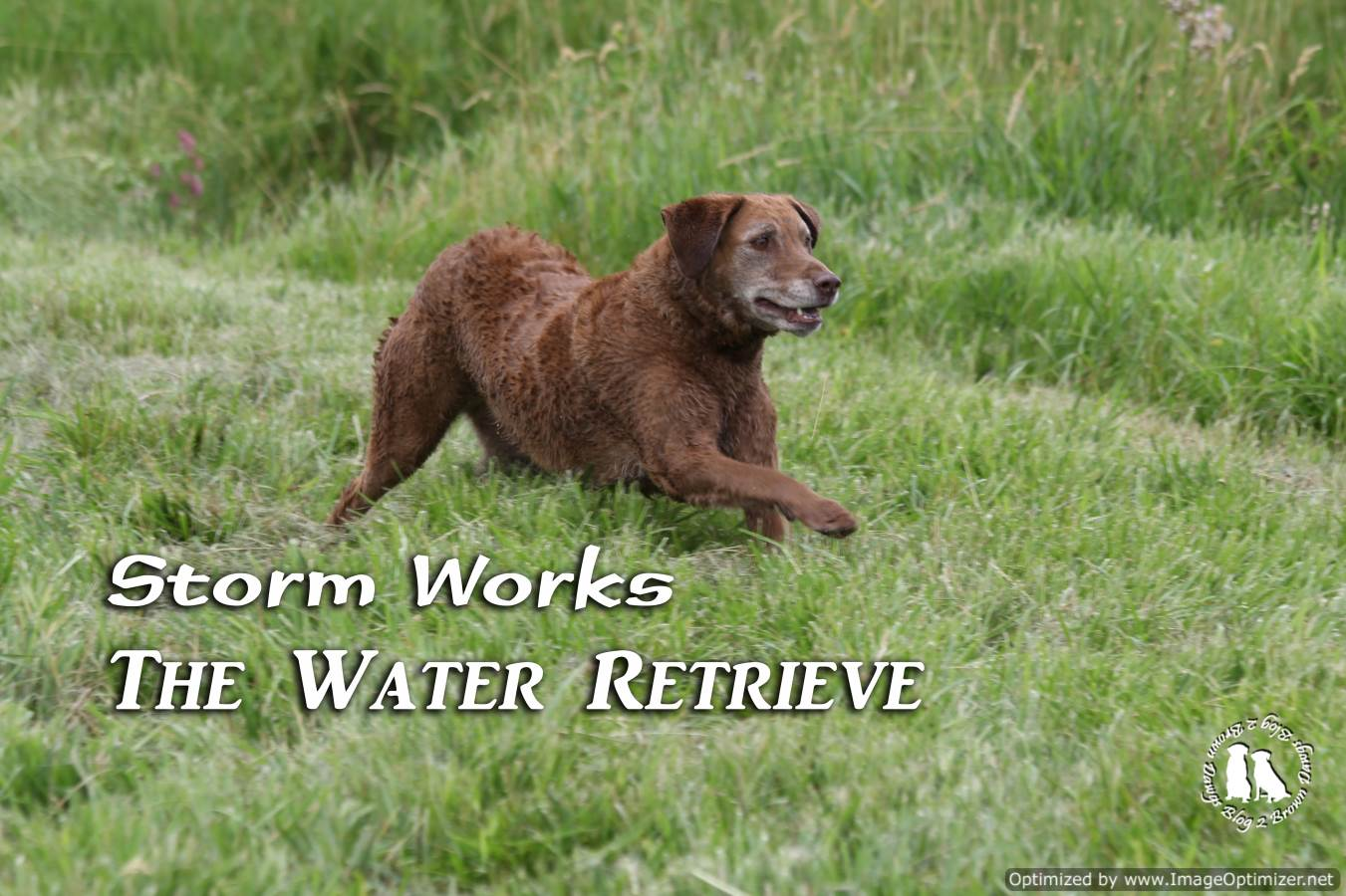 Storm Works The Water Retrieve