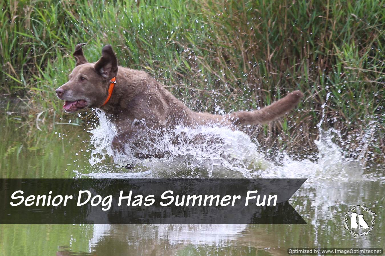 Senior Dog Has Summer Fun