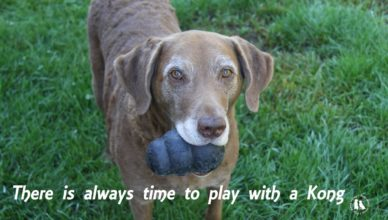 There Is Always Time To Play With A Kong