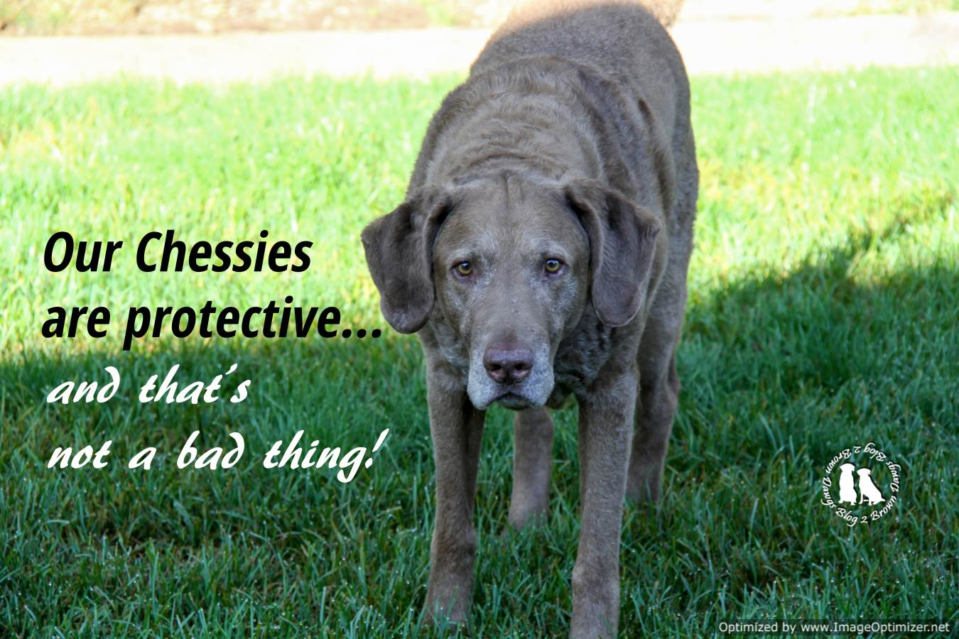 Chessies Are Protective