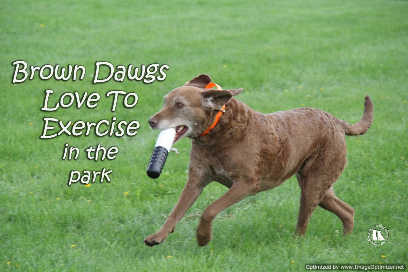 Brown Dawgs Love To Exercise In The Park