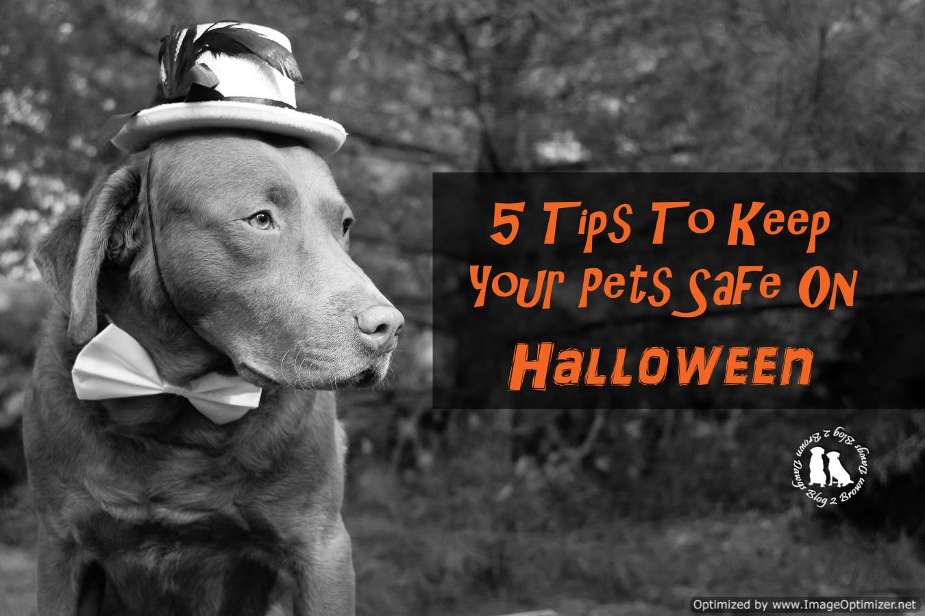 5 Tips To Keep Your Pets Safe On Halloween