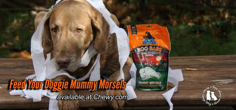 Feed Your Doggie Mummy Morsels Image