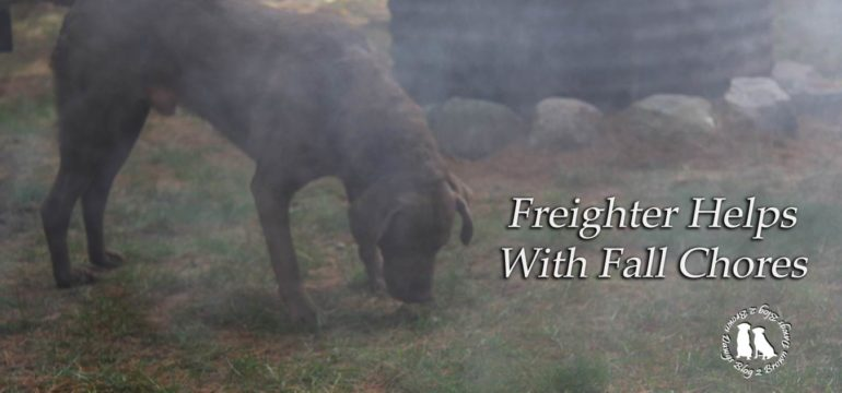 Freighter Helps With Fall Chores Image