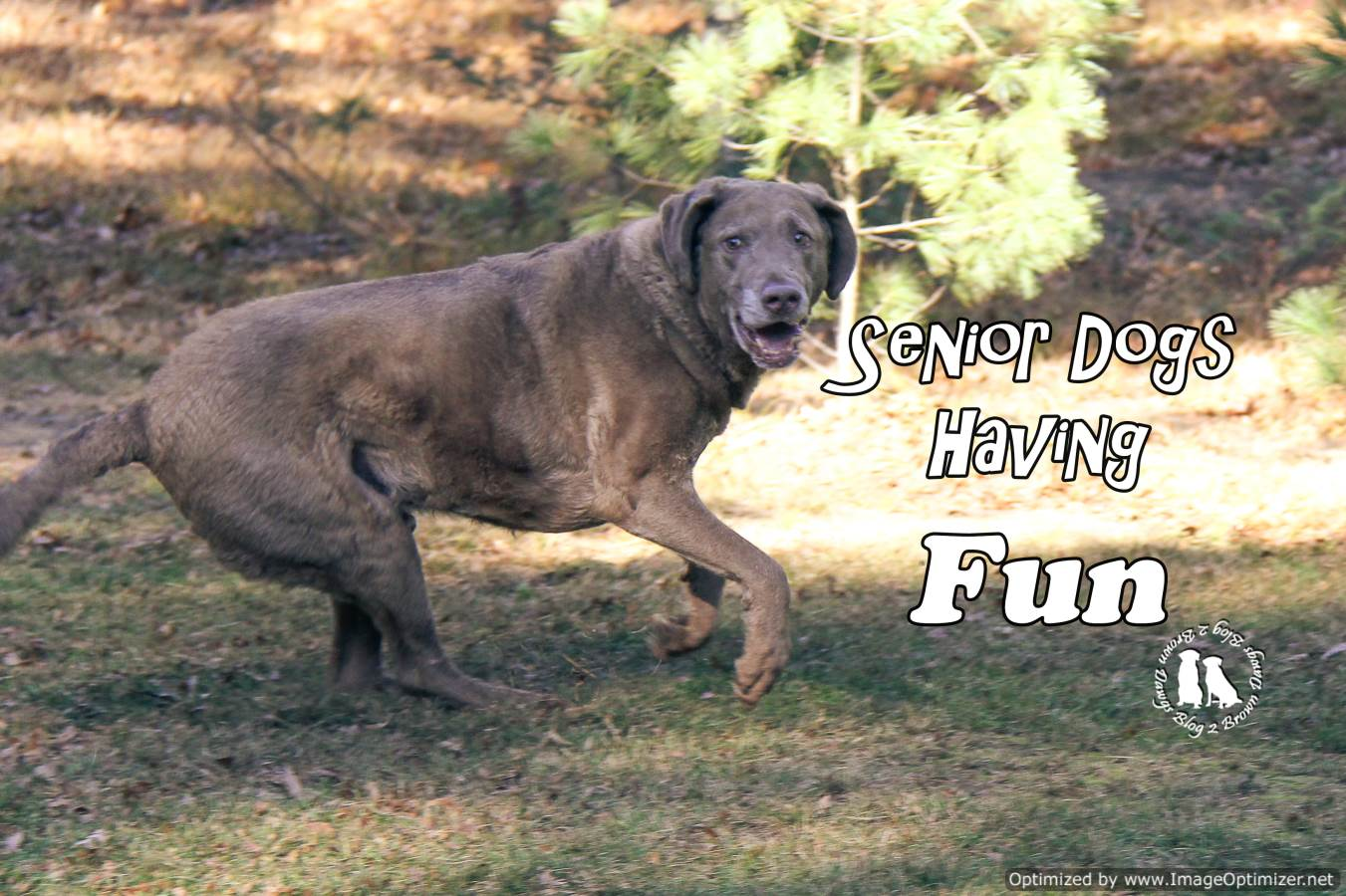 Senior Dogs Having Fun