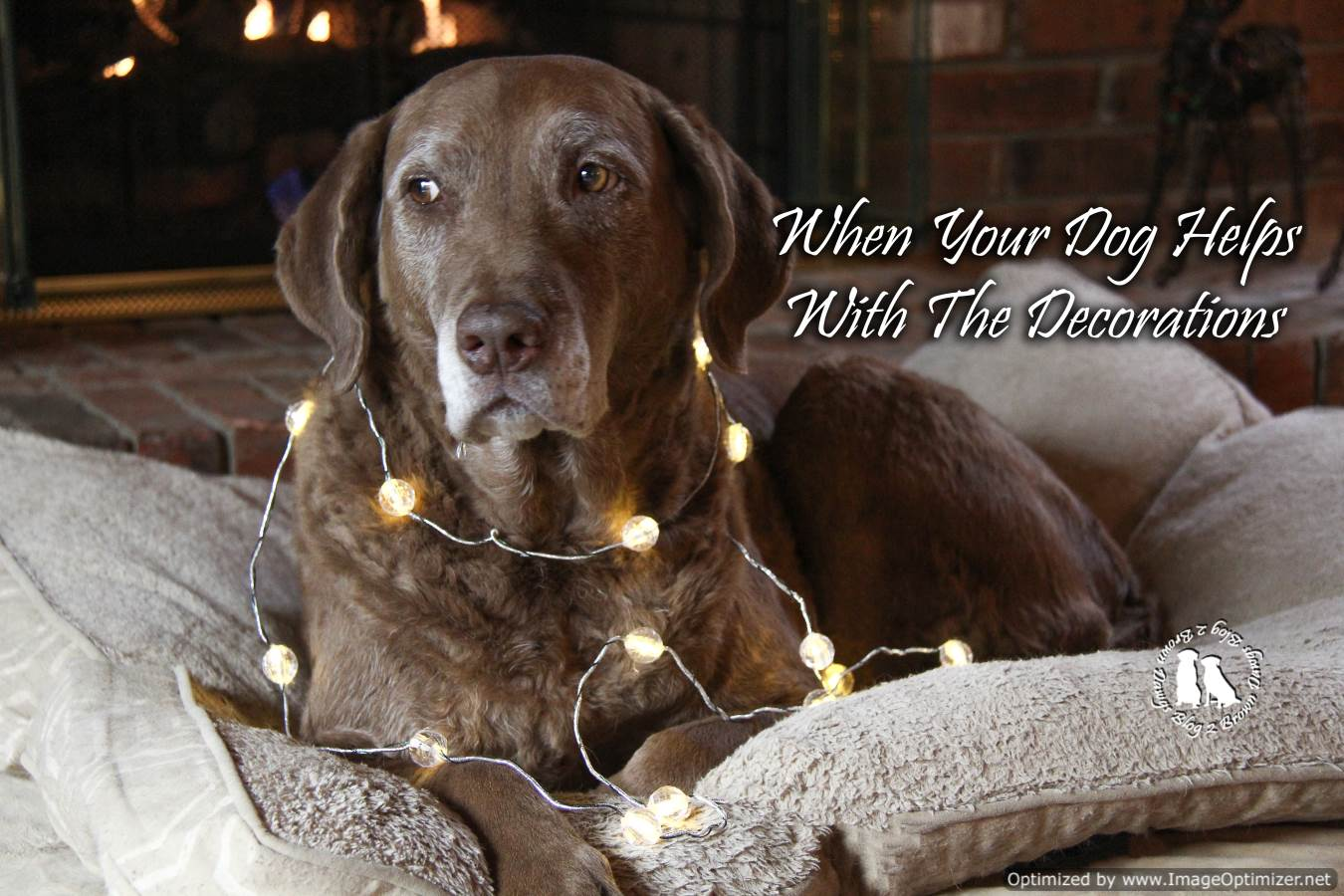 When Your Dog Helps With The Decorations