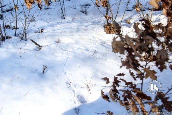 Grouse Tracks