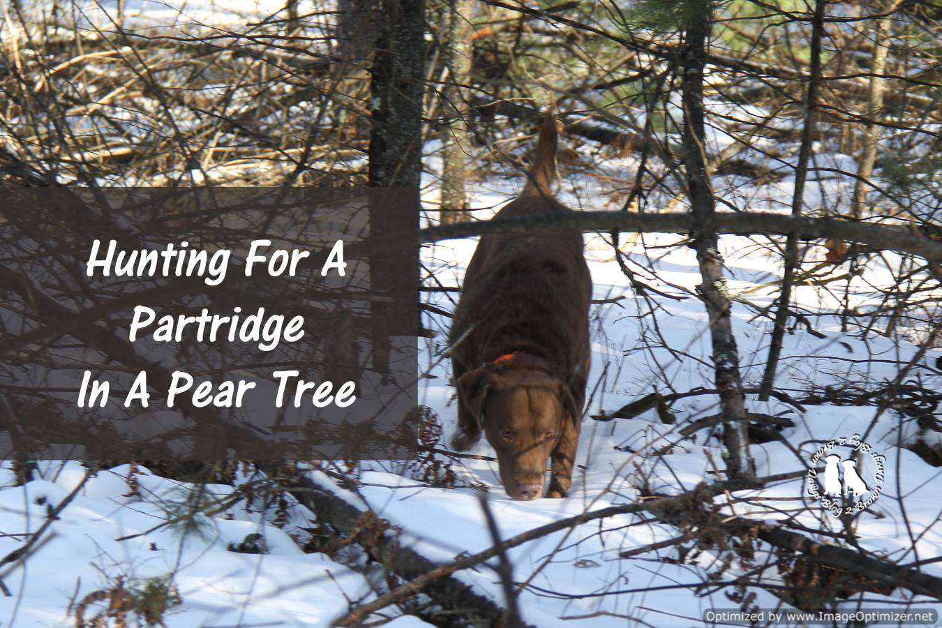 Hunting For A Partridge In A Pear Tree