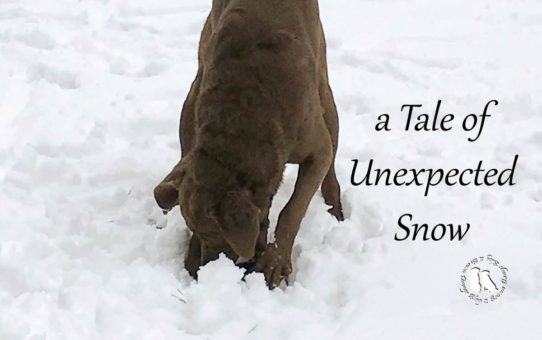 A Tale Of Unexpected Snow