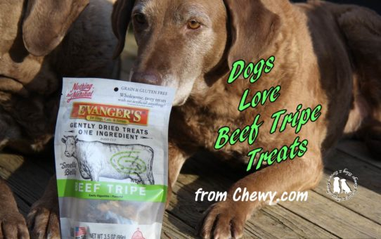 Dogs Love Beef Tripe Treats