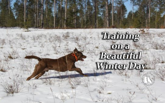 Training On A Beautiful Winter Day