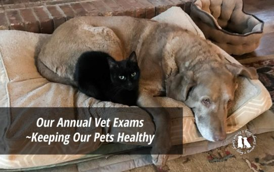 Our Annual Vet Exams