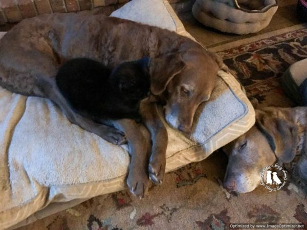cats dogs sleep together