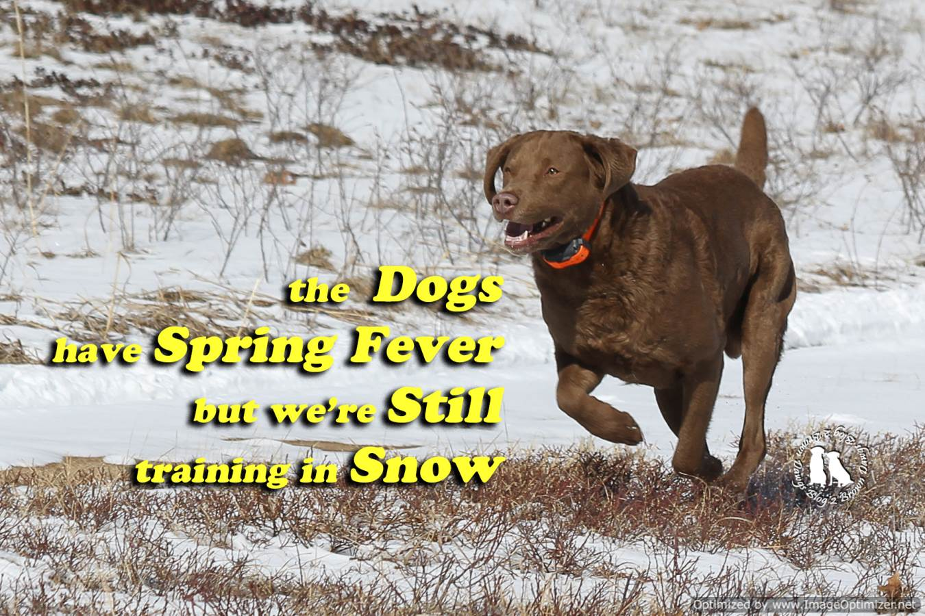 The Dogs Have Spring Fever But We're Still Training In Snow
