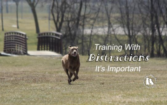 Training With Distractions-It's Important