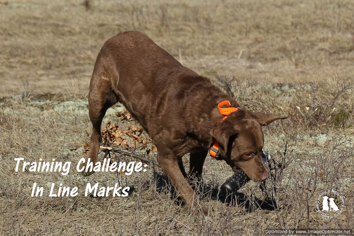 Training Challenges: In Line Marks