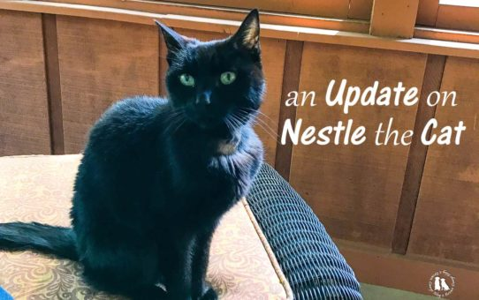 An Update On Nestle The Cat