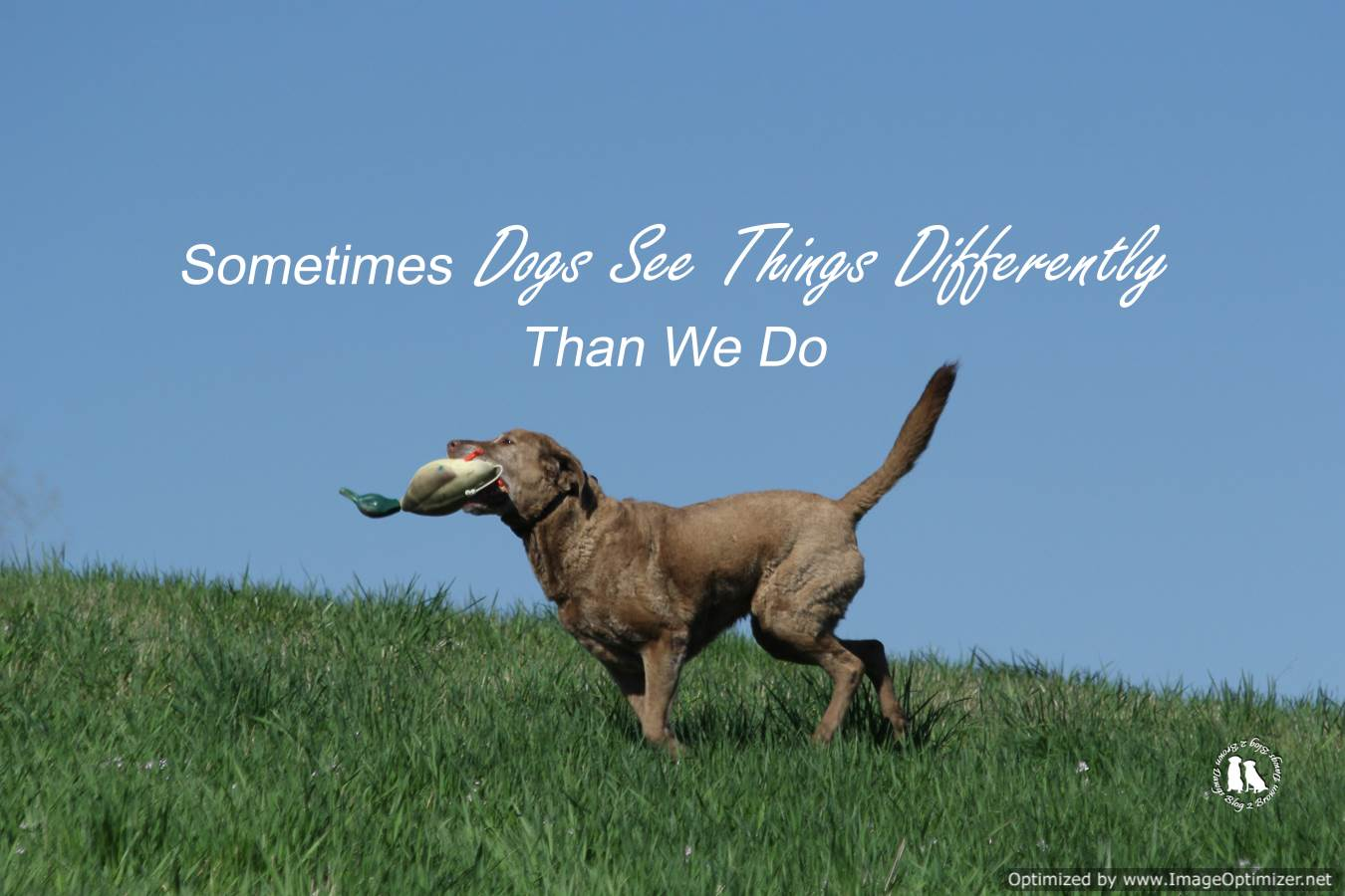 Dogs See Things Differently