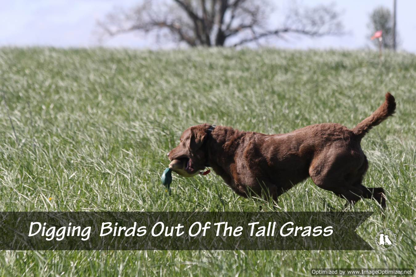 Digging Birds Out Of The Tall Grass