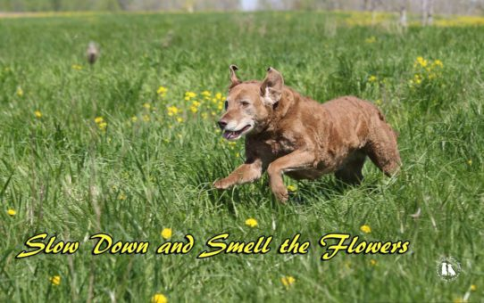 Slow Down And Smell The Flowers