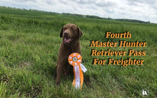 Fourth Master Hunter Retriever Pass