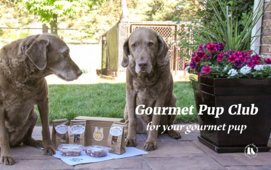 Gourmet Pup Club For Your Gourmet Pup