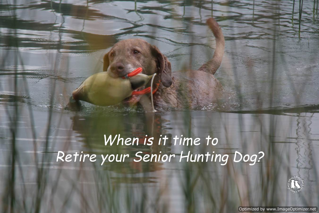 When Is It Time To Retire Your Senior Hunting Dog