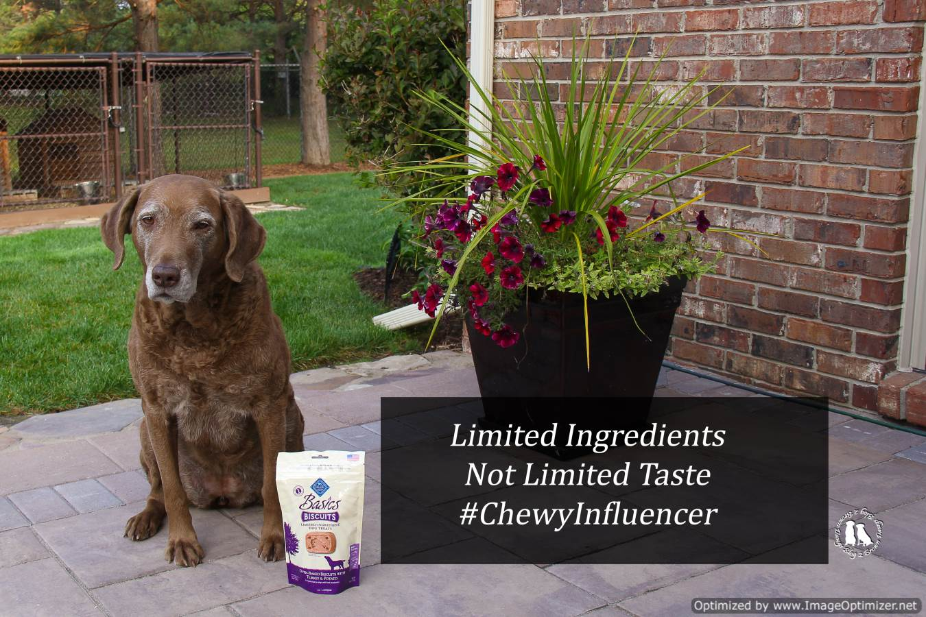 Limited Ingredients Not Limited Taste